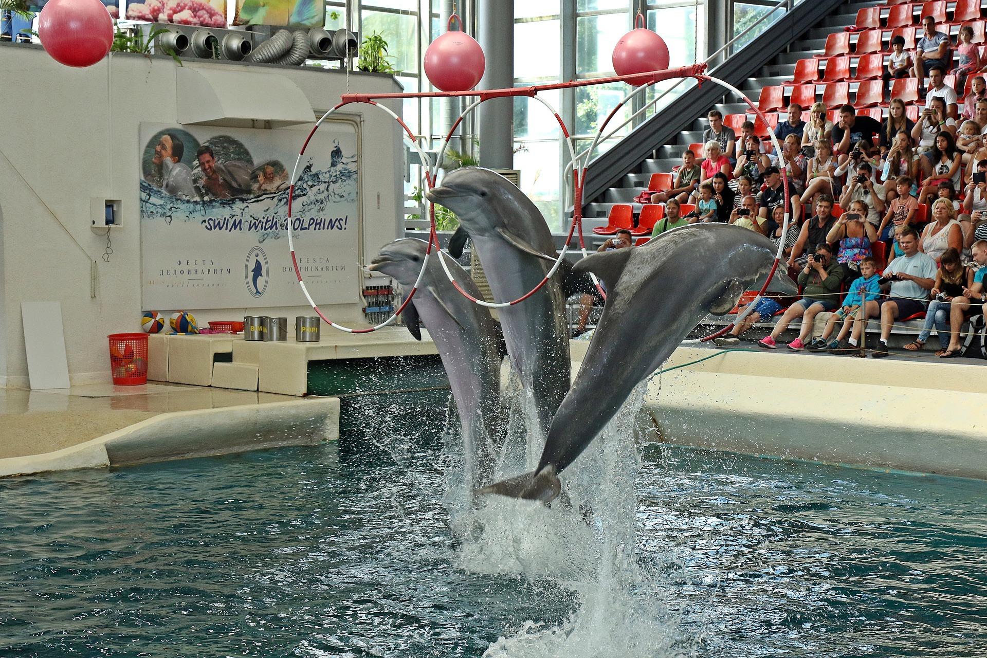 dolphins_1651975_1920.jpg